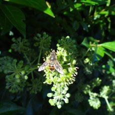 Een woestijn voor bijen…   (ofwel: nieuw ontwerp grasveldje)