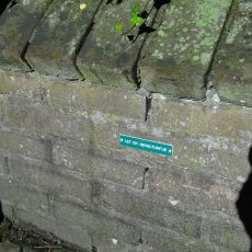 FrisDenkDoen-groep: Groen