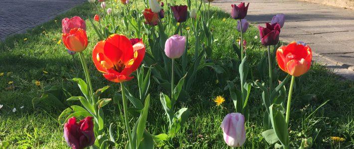 Voorjaar 2018 in onze wijk bloeit